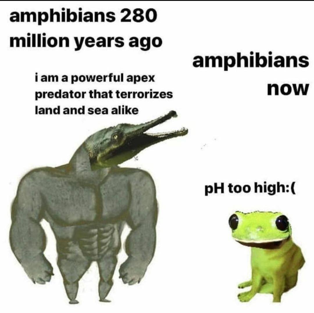 Ribbit - meme