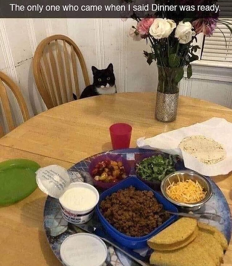 cat is ready for taco night - meme