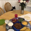 cat is ready for taco night