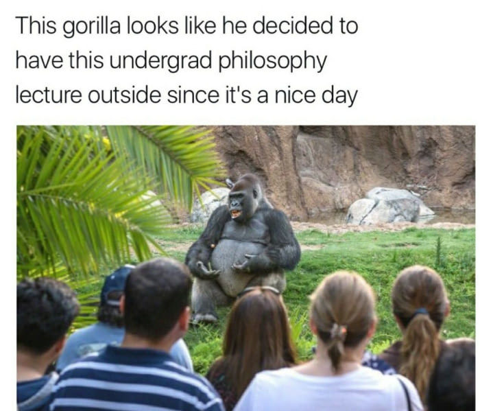 Wise gorilla - meme