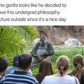 Wise gorilla