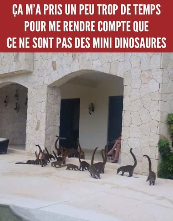 Diplodocus - meme