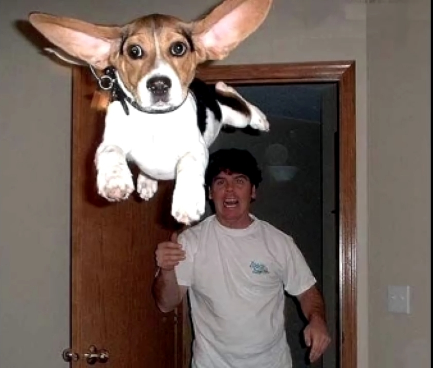 Perro volador - meme