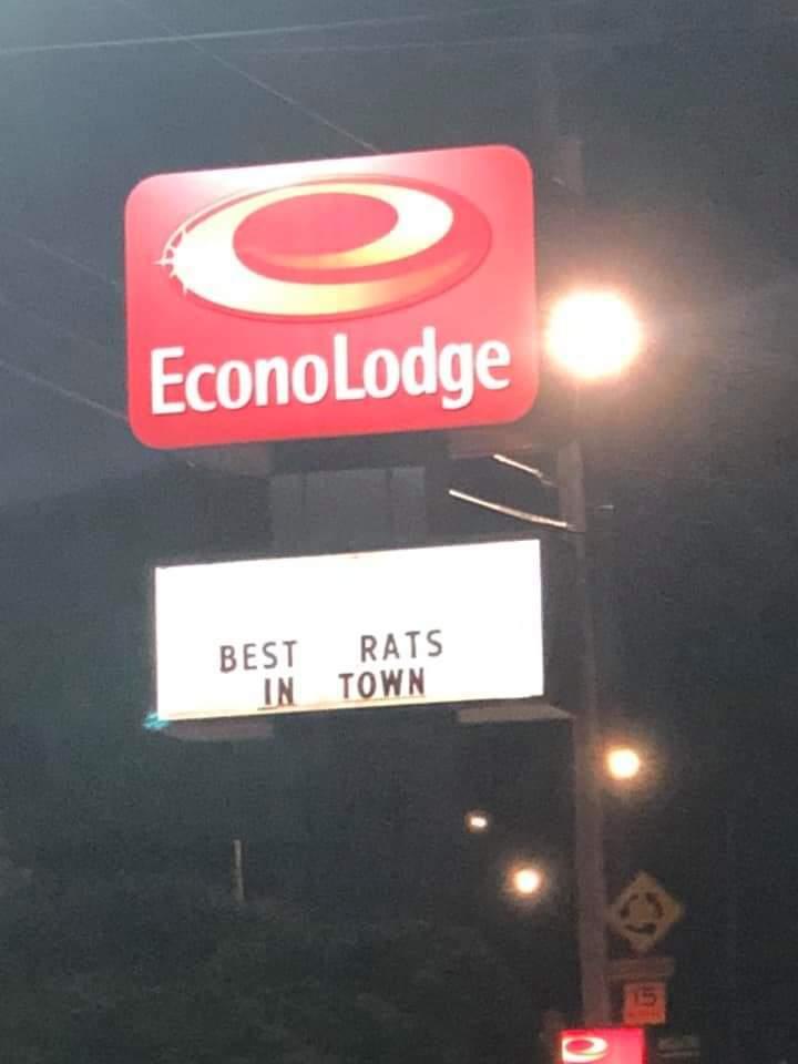 You dirty rat... - meme