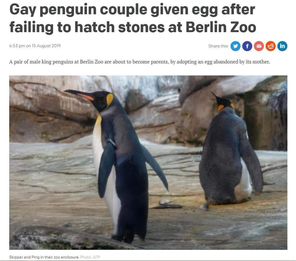 Gay penguins are so wholesome - meme