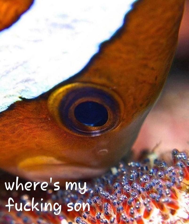 Nemo - meme