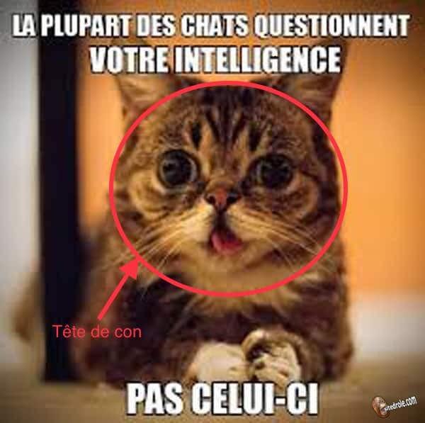 Commen un chat peut-il être aussi con??? - meme