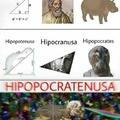 hipopocratenusa