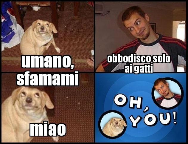 Miao miao - meme