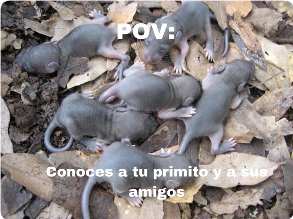 POV significa Point of View en inglés o Punto de vista en español, en resumen, lo use mal .-. - meme