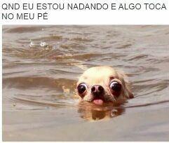 #sempre - meme