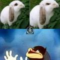 Siganme los conejos :^)