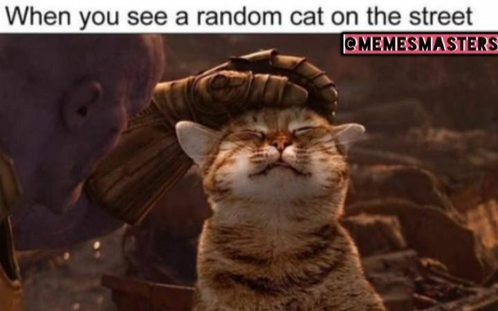 Título foi acariciar um animal de rua - meme