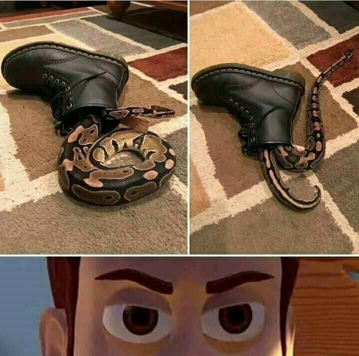 Bota na minha cobra... Não pera.... - meme