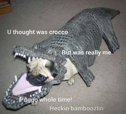 Heckin Bamboozlin!! - meme