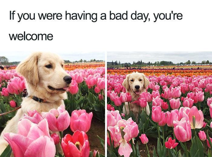 Good girl bringing the smiles - meme