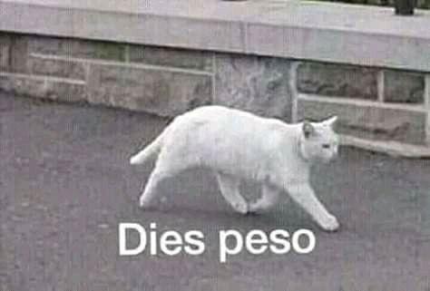 Dies peso - meme