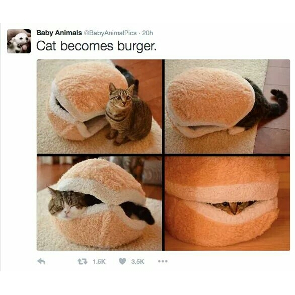 Cat burger - meme
