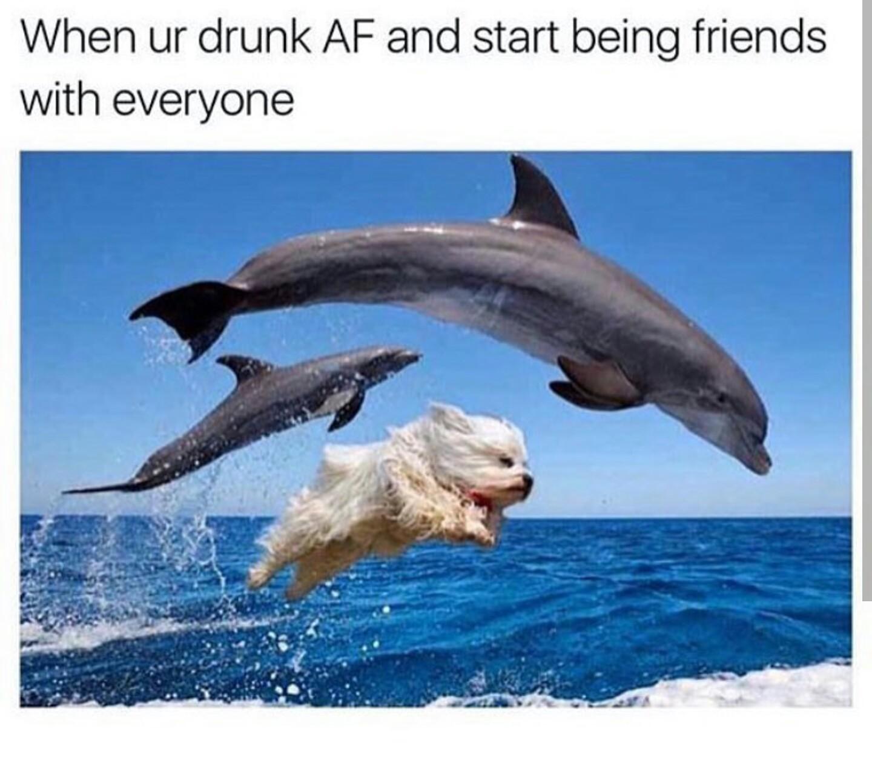 Doggophin - meme