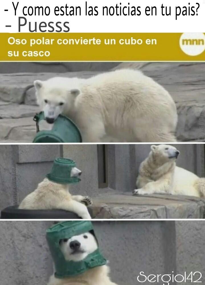 Stos osos - meme
