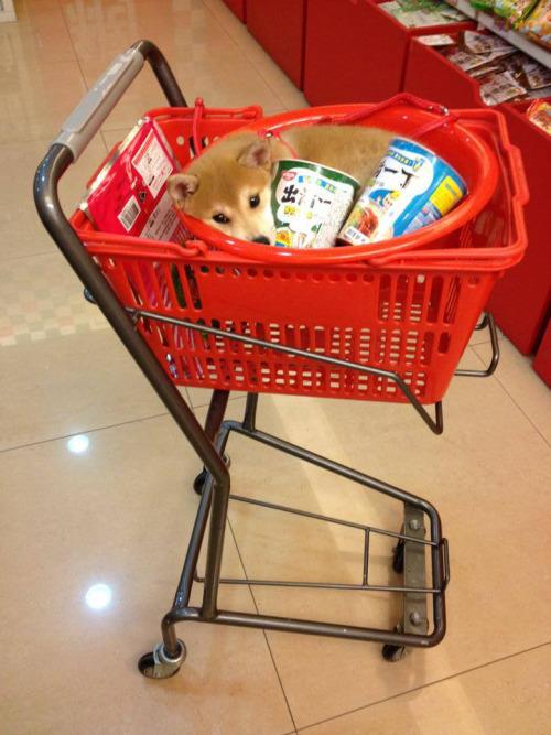 Such cart! Wow! Much food - meme