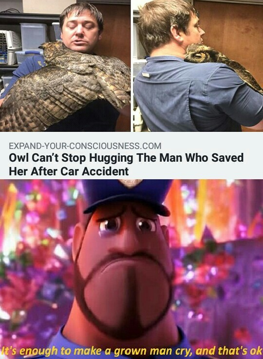 Owl can't stop hugging the man who saved her ater car accident - meme