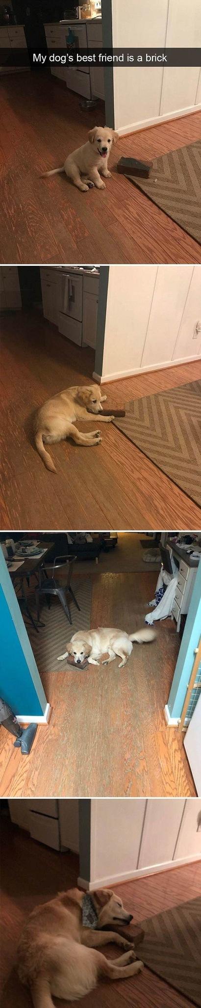 Good brick doggo - meme