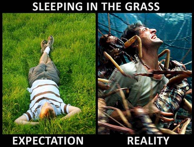 Sleeping in the grass - meme