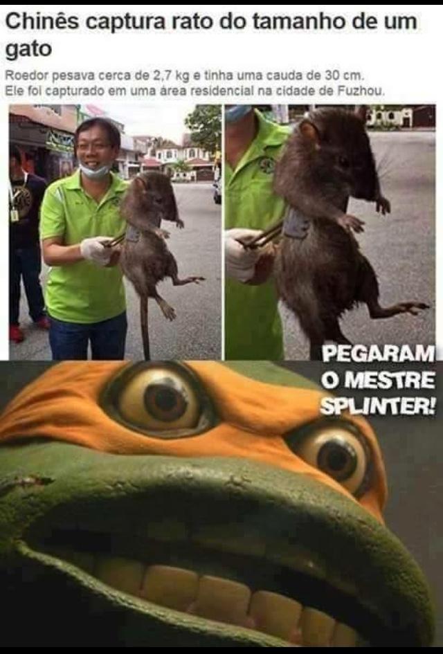 tartarugas ninjas - meme
