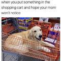 Buying a dog