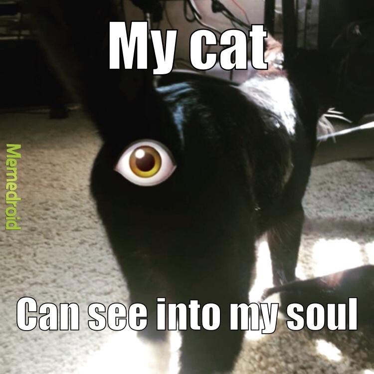 the all seeing brown eye - meme