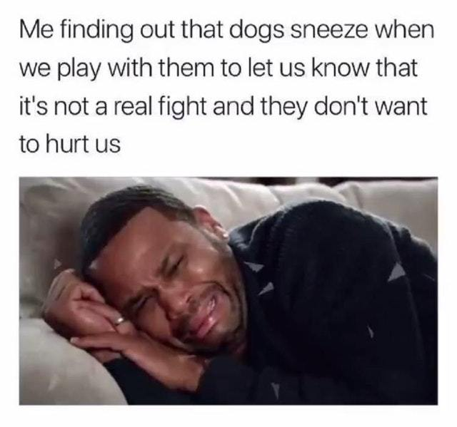 Dogs sneeze when playing to let us know that they don't want to hurt us - meme