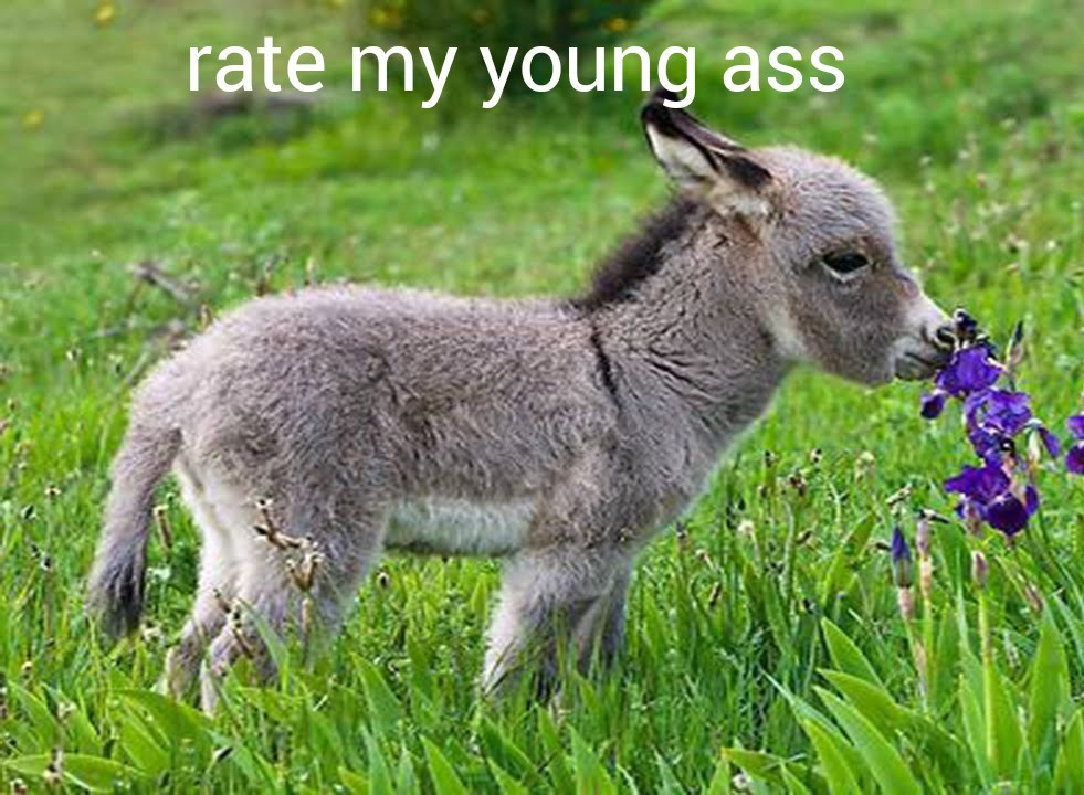 donkey - meme