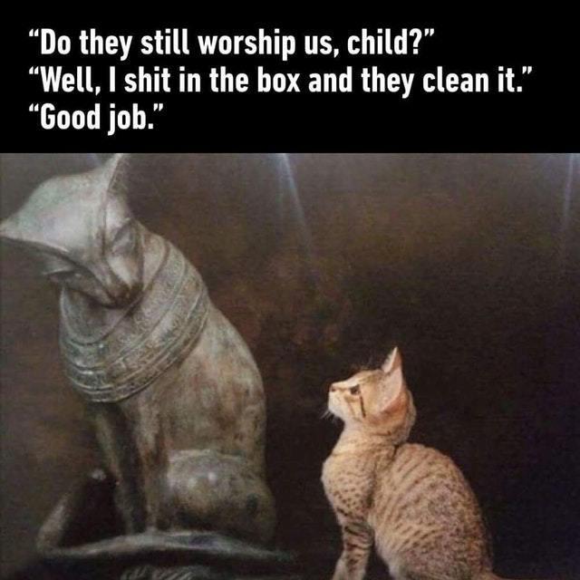 Do they still worship us? - meme