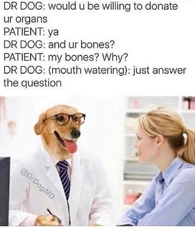 Doctor Doge getting shady - meme