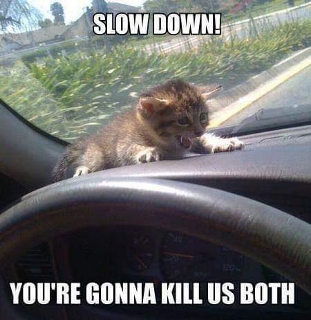 Cats be like - meme