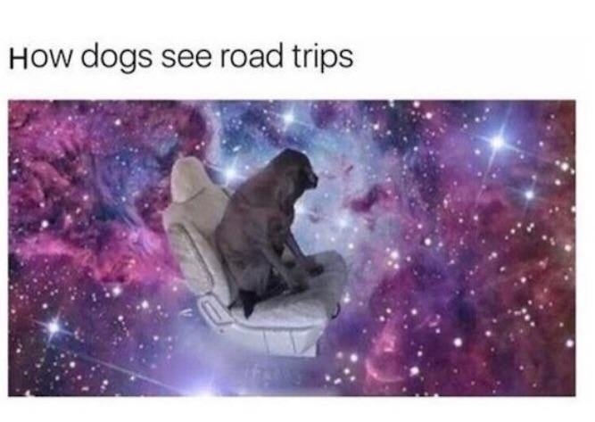 How dogs see road trips - meme