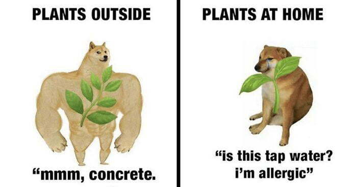 Plants be like - meme