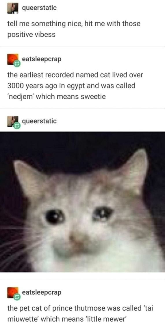 Egyptian Cattos - meme