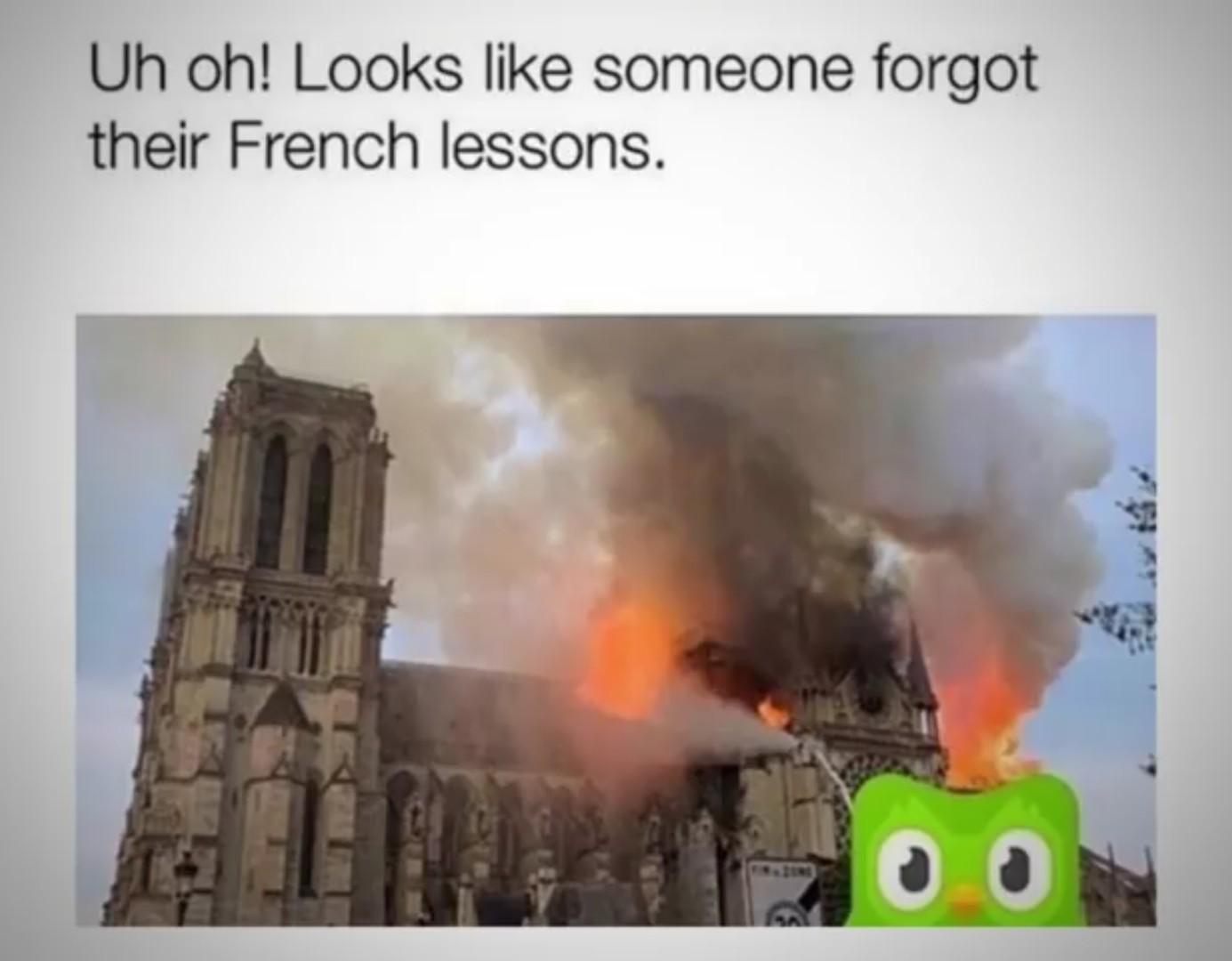 Duolingo owl - meme