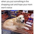Mommy ok with good doggo