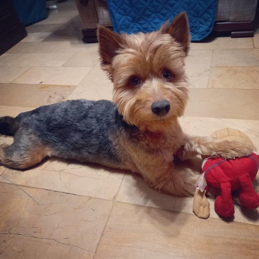 Doggo reveal PD: Se llama Spike - meme