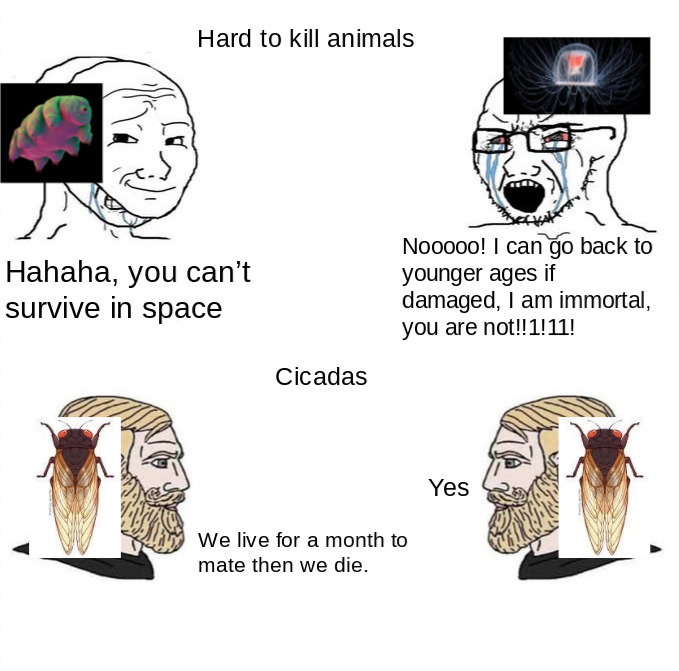 Tardigrade and immortal jellyfish - meme