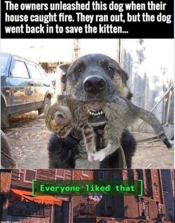Insert Dog savior moment - meme