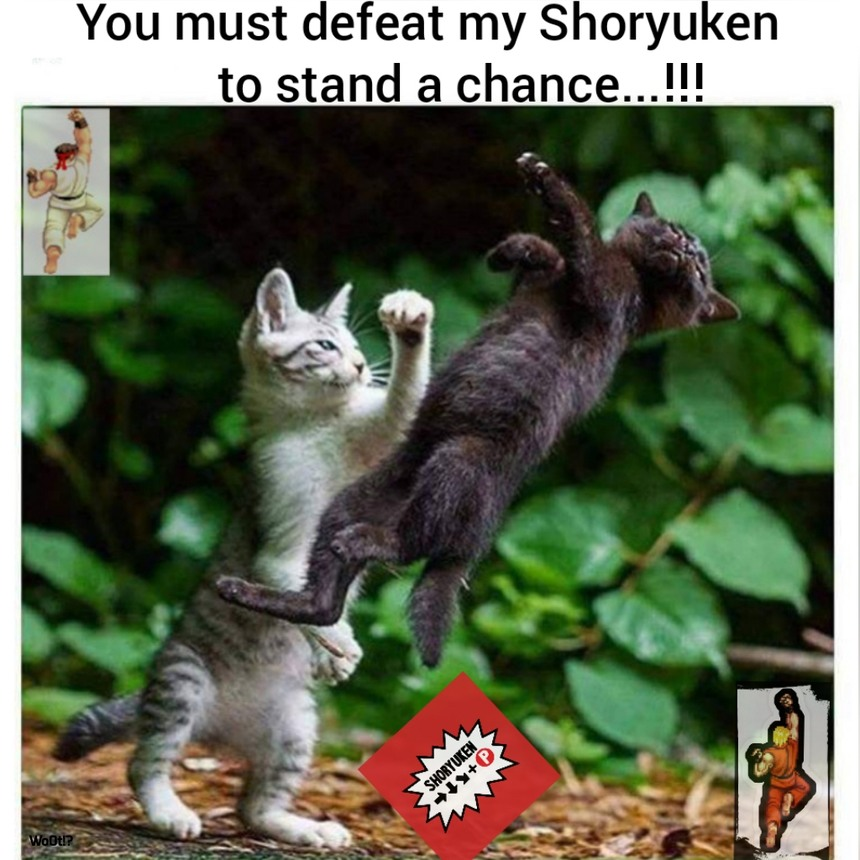 Street fighter cat shoryuken - meme