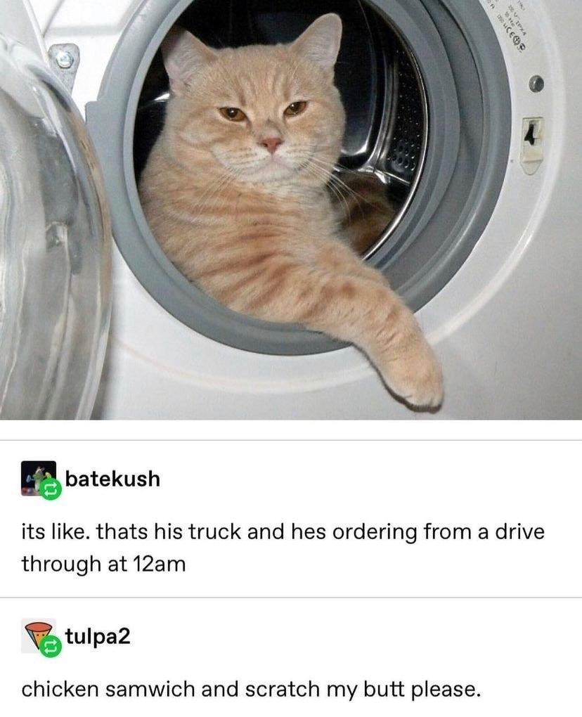 Kat - meme