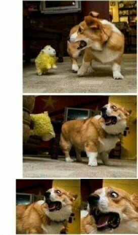 Terrifying yellow sheep - meme