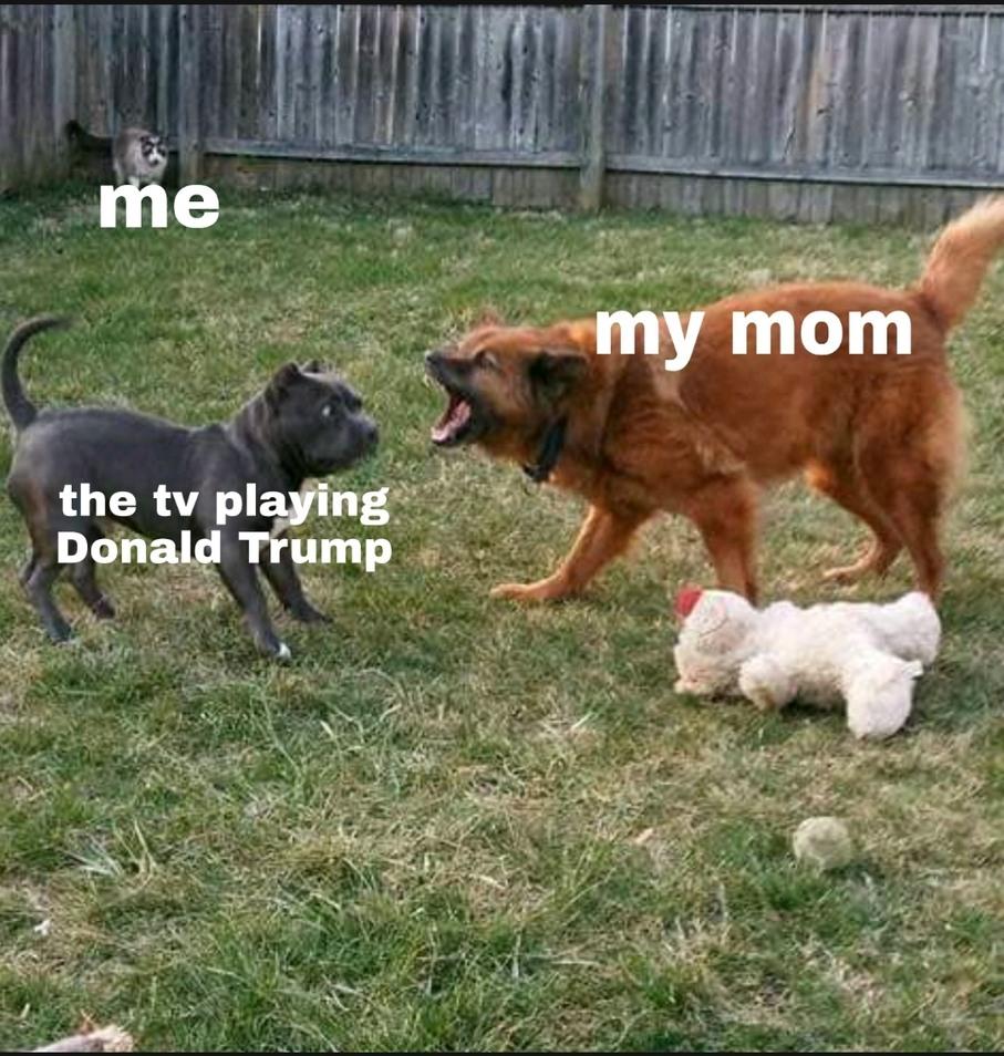 Rest in pie doggo :') - meme