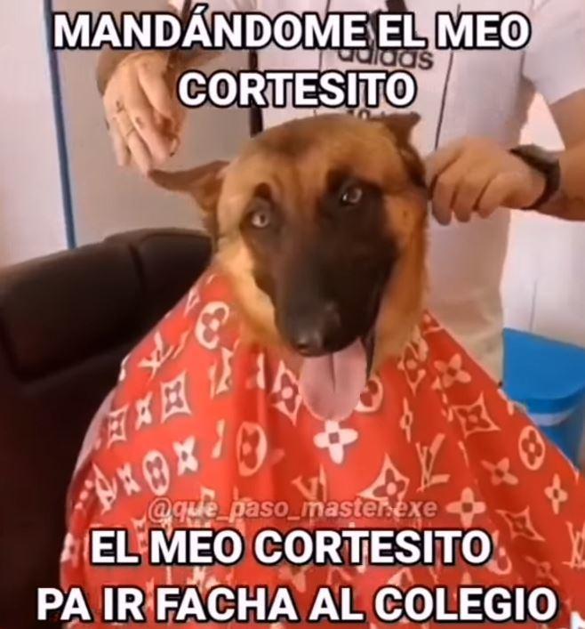 ta piola el perro - meme