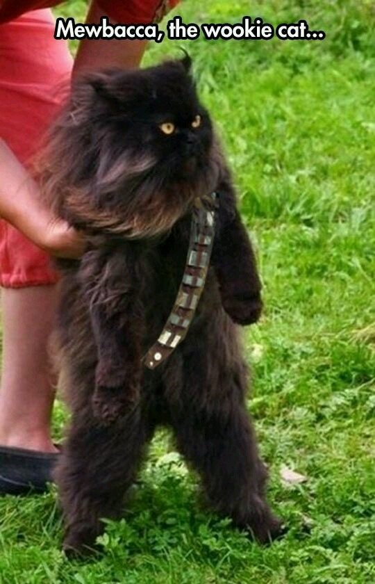 Mewbacca wookie cat - meme
